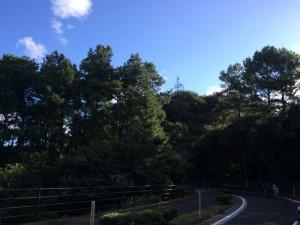 朝はいい天気